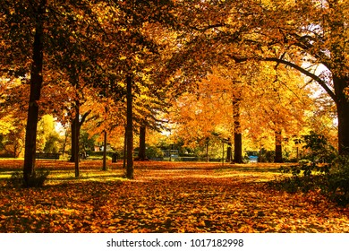 A beautiful and romantic park with colorful trees, autumn landscape