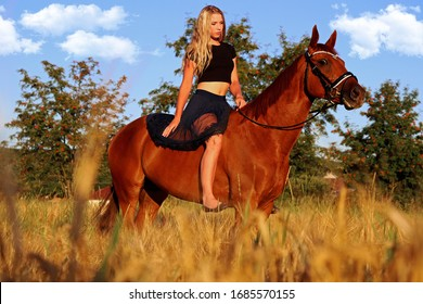 Beautiful romantic portrait girl in dress with a brown big horse gelding in the field, forest
