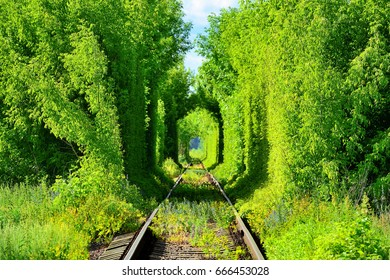 Beautiful romantic railway tunnel in the trees with sunspots