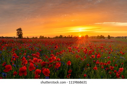 beautiful, romantic sunset over a poppy meadow