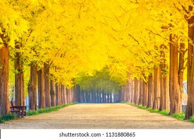 Beautiful romantic walkway among tree tunnel in the autumn season, South Korea or Republic of Korea
