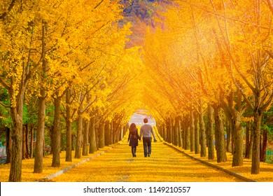 Beautiful romantic walkway ginkgo tree tunnel in the autumn season, South Korea