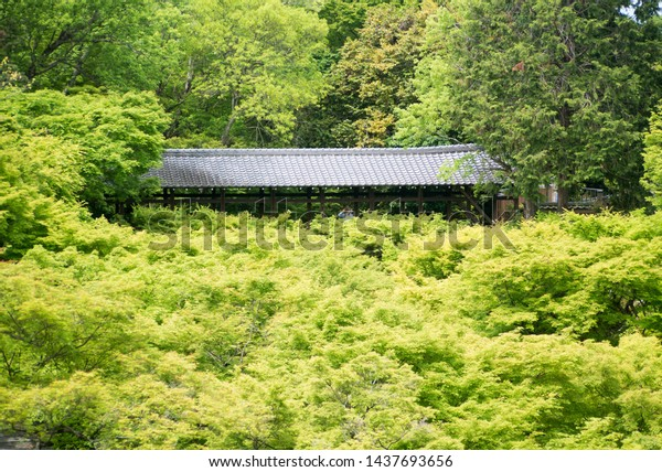 Beautiful roofed wooden bridge of Tofukuji temple surrounded by fresh green Japanese momiji maple trees