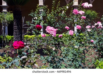 Beautiful rose garden of pink and red roses