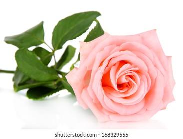 Beautiful rose isolated on white