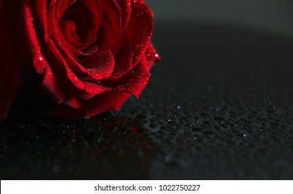 A beautiful rose is laying on surface.