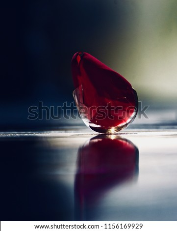 Beautiful rose petals inside a broken glass object unique blurry photo