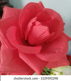 Beautiful rose, share this image with your love and your friends for giving him happens and see more my pics on shutterstock.com and download it.