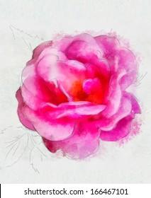 Beautiful rose, Watercolor painting