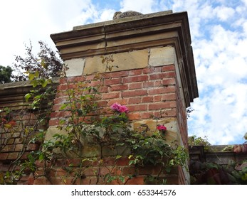 Beautiful roses against a brick wall on the grounds of Hever Castle. England, the United Kingdom.