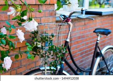 Beautiful roses and bicycle with basket in front of brick wall in Copenhagen, Denmark. Colorful old town architecture. Copenhagen style, European street, Denmark bicycle