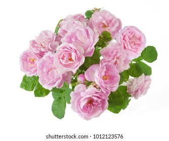 Beautiful roses bunch isolated on white