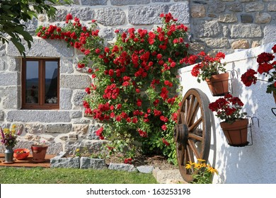 beautiful roses and cart wheel in front of an old house