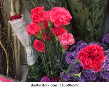 Beautiful Rose Flowers Hd Stock Photos Images Photography