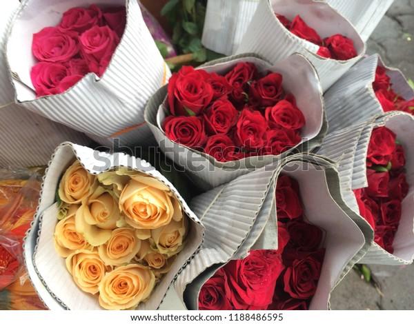 Beautiful Roses Hd Closeup Beautiful Rose Stock Image