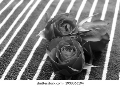 beautiful roses in the old photo
