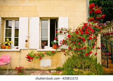 Beautiful roses in Saint-Emilion, France
