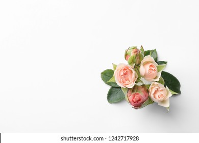 Beautiful roses and space for text on white background, top view