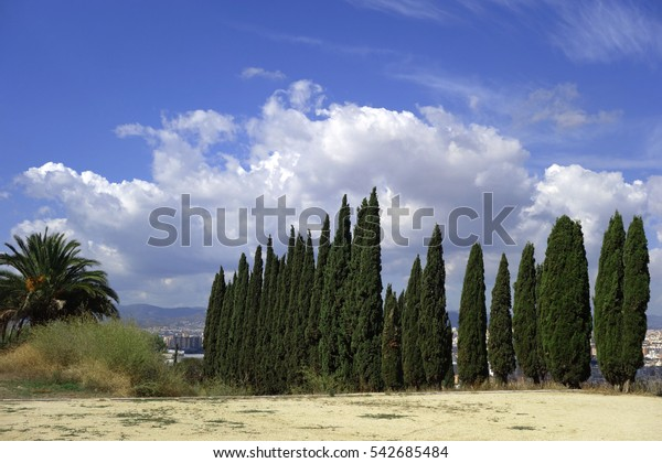 A beautiful row of cypress trees on a background blue sky, Montjuic,Barcelona, Catalonia, Spain.
