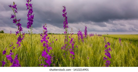 Beautiful rural field in summer, with storm clouds and rain