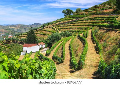 Beautiful rural landscape with bright green vine cultures in the Douro region, Portugal