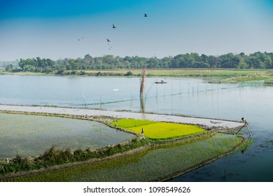 Beautiful rural landscape of Paddy field with river and blue sky in the background. Kolkata, West Bengal, India