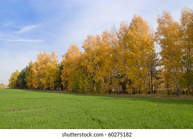 The beautiful rural landscape. Phenological signs of autumn.