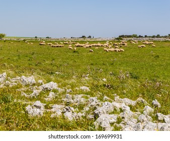 a beautiful rural landscape with some rocks. South of Italy, Apulia