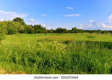 Beautiful rural landscape of trees, fields, grass and clouds. Agriculture, flowers bloom in spring, lawn