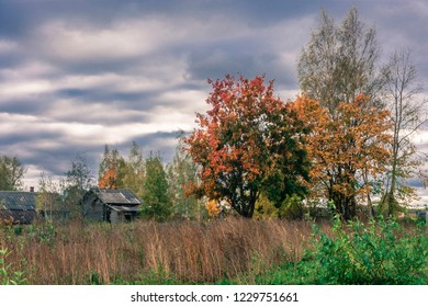 Beautiful rustic autumn landscape with bright red-yellow leaves on trees, Russia.