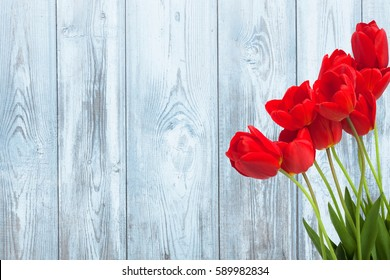 Beautiful Rustic background with Red Tulips Flowers on a light blue wood texture. Colorful Card for Mothers Day, Birthday, International Women's Day March 8.