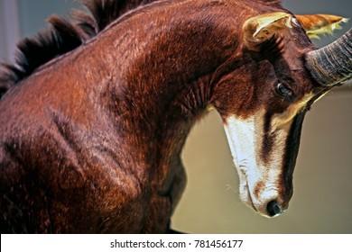 beautiful sable antelope