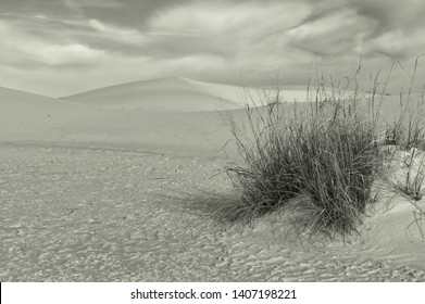The Beautiful Sagebrush Of white sands, New mexico