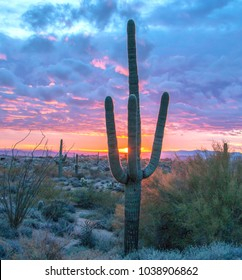 Beautiful Saguaro cactus at Browns Ranch trail in Scottsdale with brilliant sunset in background.
