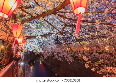 Beautiful sakura cherry blossom in Nagameguro canel with light up at sunset, spring season in Japan