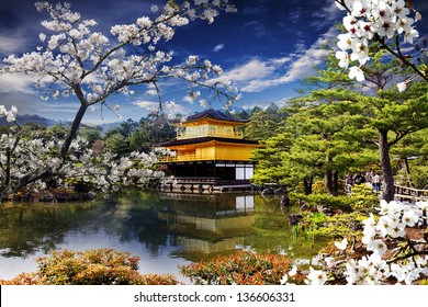 Beautiful sakura with nice gold temple