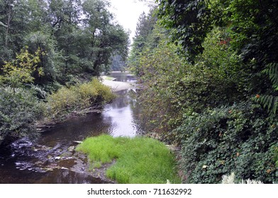 Beautiful salmon spawning stream surrounded by green trees in the northwest daytime