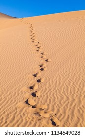 beautiful sand dune in sunrise in the sonoran desert with human footsteps in the sand