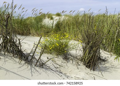 Beautiful sand dunes with dune grass on the North Sea coast.
