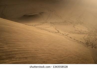 beautiful sand dunes of maspalomas on gran canaria island, spain