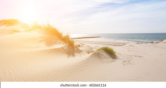 Beautiful sand dunes on the North Sea coast in Renesse, Zeeland, Holland