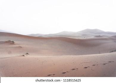 Beautiful sand dunes in the Sahara desert. Morocco at sunset