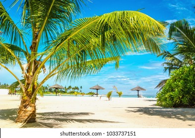 A beautiful sandy beach with palm trees