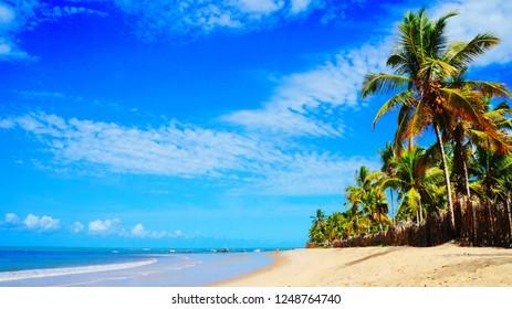 Beautiful, sandy beach with palm trees and turquoise sea in Trancoso, near Porto Seguro, Bahia, Brazil