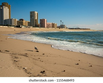 Beautiful sandy beach in Povoa de Varzim, Porto district , Portugal. A seagull stands in the foreground and tall apartment buildings line the seafront.