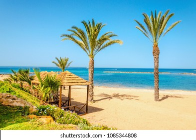 A beautiful sandy beach with tall palm trees with a wooden pergola and sun loungers