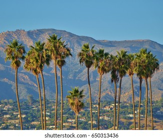 Beautiful Santa Barbara, California in this view with a line of tall palm trees rising above the residential area with the Santa Ynez Mountains and a clear blue sky in the background.