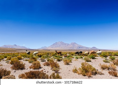 Beautiful scenario in the Atacama Desert, northern Chile, South America