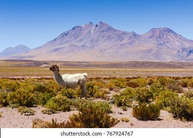 Beautiful scenario in the Atacama Desert, northern Chile, South America