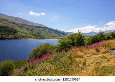 Beautiful Scene of Blue Lake in Snowdonia on Sunny Day with Pink Willow Herb Flowers